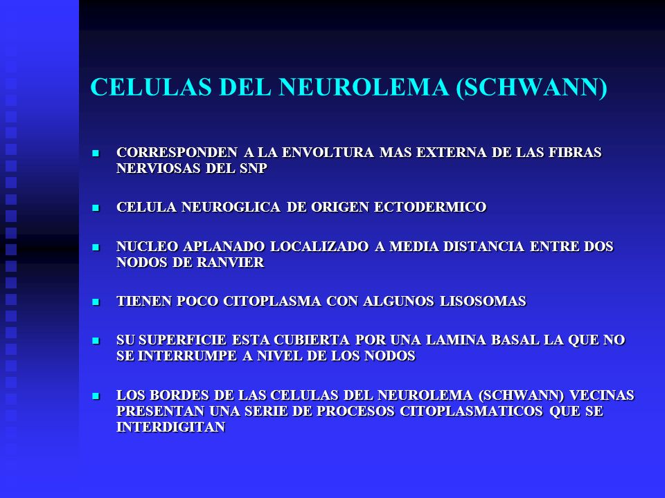 CELULAS DEL NEUROLEMA (SCHWANN) CORRESPONDEN A LA ENVOLTURA MAS EXTERNA DE LAS FIBRAS NERVIOSAS DEL SNP CORRESPONDEN A LA ENVOLTURA MAS EXTERNA DE LAS
