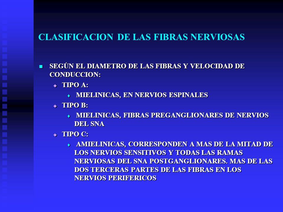 CLASIFICACION DE LAS FIBRAS NERVIOSAS SEGÚN EL DIAMETRO DE LAS FIBRAS Y VELOCIDAD DE CONDUCCION: SEGÚN EL DIAMETRO DE LAS FIBRAS Y VELOCIDAD DE CONDUC