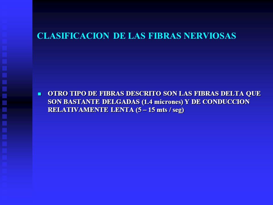 CLASIFICACION DE LAS FIBRAS NERVIOSAS OTRO TIPO DE FIBRAS DESCRITO SON LAS FIBRAS DELTA QUE SON BASTANTE DELGADAS (1.4 micrones) Y DE CONDUCCION RELAT
