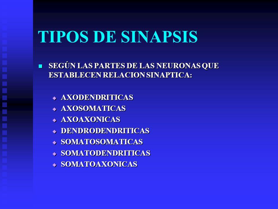 TIPOS DE SINAPSIS SEGÚN LAS PARTES DE LAS NEURONAS QUE ESTABLECEN RELACION SINAPTICA: SEGÚN LAS PARTES DE LAS NEURONAS QUE ESTABLECEN RELACION SINAPTI