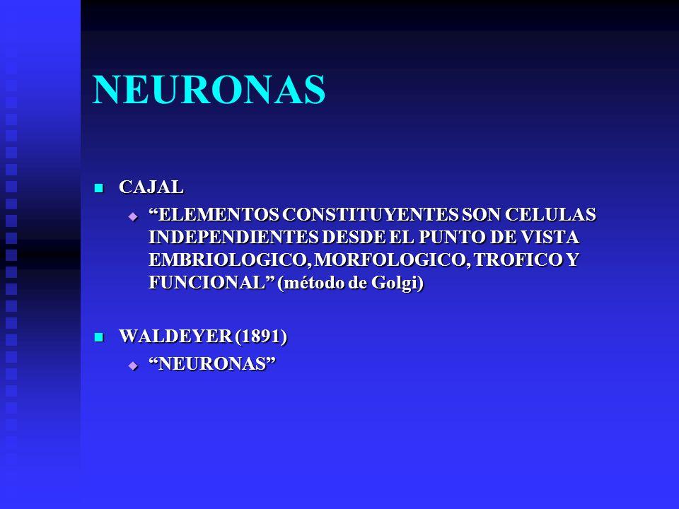 NEURONAS ESTRUCTURA ESTRUCTURA ESTRECHA RELACION FORMA FUNCION (recibir estímulos, traducirlos a una señal o impulso nervioso, conducir impulso a cierta distancia y finalmente entregarlo) ESTRECHA RELACION FORMA FUNCION (recibir estímulos, traducirlos a una señal o impulso nervioso, conducir impulso a cierta distancia y finalmente entregarlo) CUERPO NEURONAL: SOMA O PERICARION CUERPO NEURONAL: SOMA O PERICARION PROLONGACIONES: PROLONGACIONES: AXON O CILINDRO EJE AXON O CILINDRO EJE DENDRITAS DENDRITAS