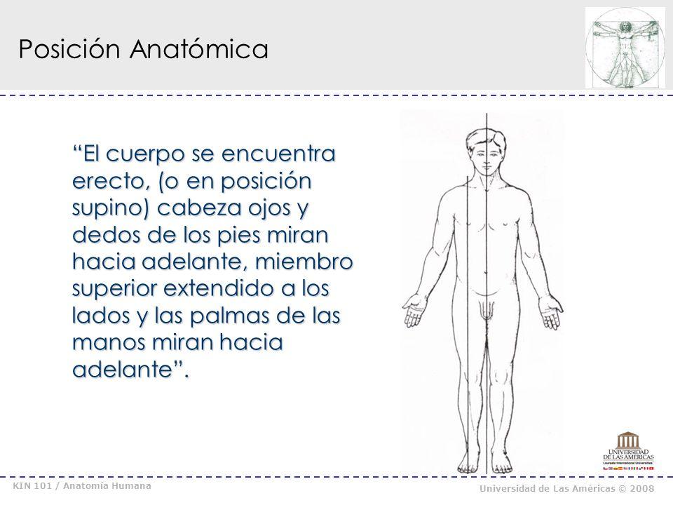KIN 101 / Anatomía Humana Universidad de Las Américas © 2008 Planos y Ejes PLANO DIVISION DEL EJE MOVIMIENTO CUERPO PERMITIDO MEDIANO Derecha-Izquierda Perlateral Flexión / Extensión CORONAL Anterior-Posterior Anteroposterior Aducción /Abducción (Frontal) (Frontal) HORIZONTAL Superior-Inferior Céfalo Podálico Rotación Medial (Int) Rotación Lateral (ext)