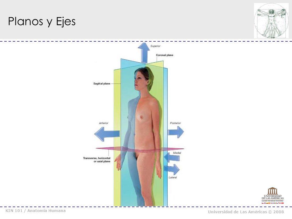 KIN 101 / Anatomía Humana Universidad de Las Américas © 2008 Recordar y aplicar … _ Los ejes son perpendiculares a los planos.