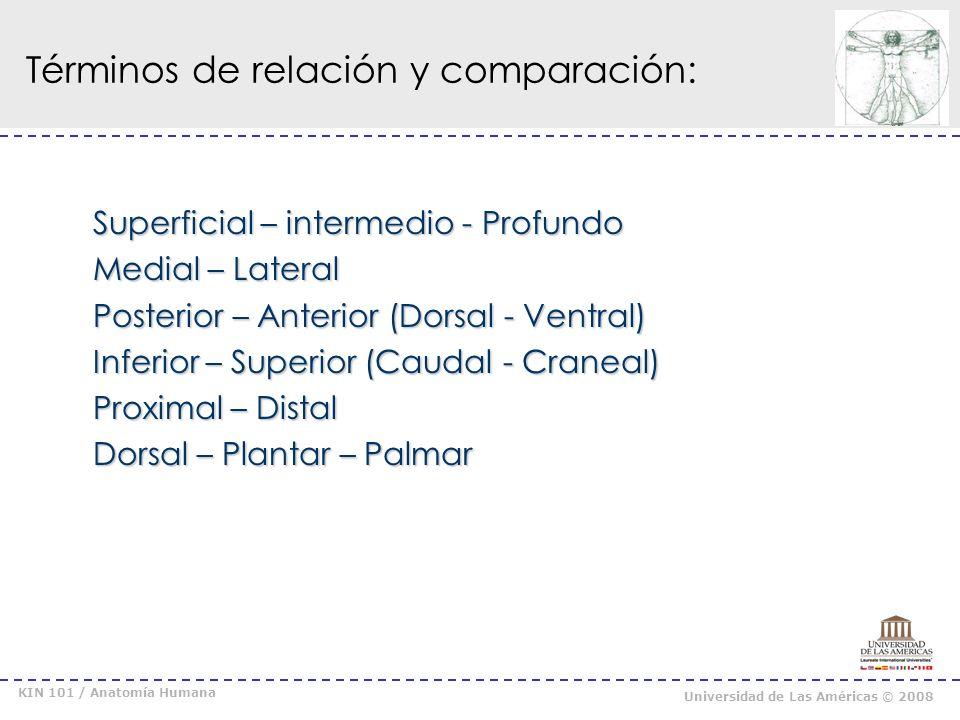 KIN 101 / Anatomía Humana Universidad de Las Américas © 2008 Términos de relación y comparación: