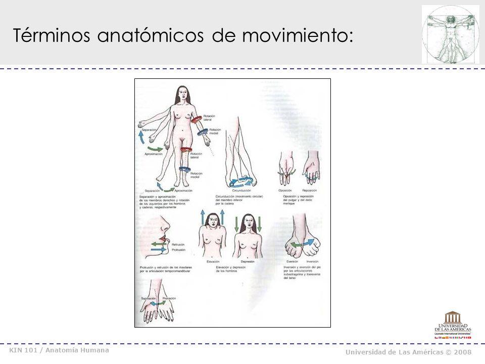 KIN 101 / Anatomía Humana Universidad de Las Américas © 2008 Flexión / Extensión