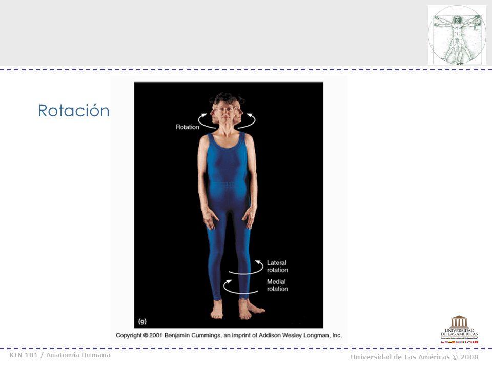 KIN 101 / Anatomía Humana Universidad de Las Américas © 2008 Pronación / Supinación