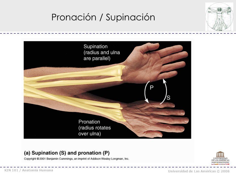 KIN 101 / Anatomía Humana Universidad de Las Américas © 2008 Dorsiflexión / Flexión Plantar