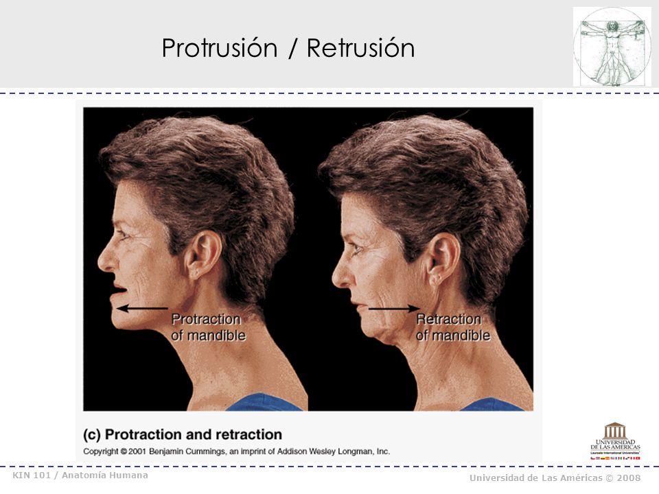 KIN 101 / Anatomía Humana Universidad de Las Américas © 2008 Elevación / Depresión