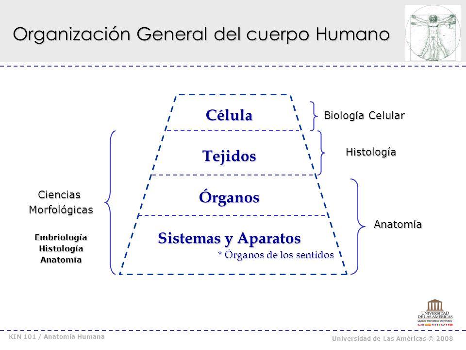 KIN 101 / Anatomía Humana Universidad de Las Américas © 2008 Organización General del cuerpo Humano Órganos Formados por distintos tipos de tejidos.