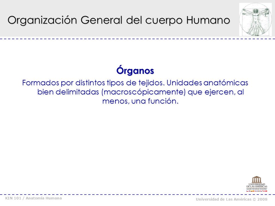 KIN 101 / Anatomía Humana Universidad de Las Américas © 2008 Organización General del cuerpo Humano Sistemas y Aparatos* Conjunto de órganos al servicio de una función compleja.