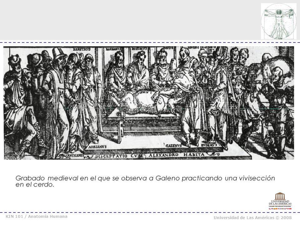 KIN 101 / Anatomía Humana Universidad de Las Américas © 2008
