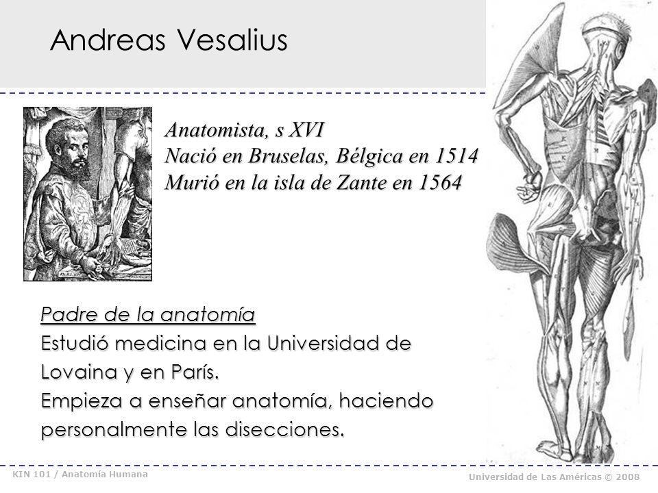 KIN 101 / Anatomía Humana Universidad de Las Américas © 2008 Anatomía Moderna De Humani Corporis fabrica libri septem (1543) De Humani Corporis fabrica libri septem (1543)