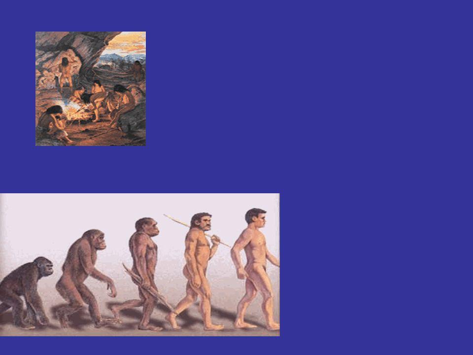 Vivían en comunidades nómades tribales (caza, recolección y pesca) Evolución del hombre Austrolopitecus Homo Habilis Homo Erectus Homo Sapiens Neander
