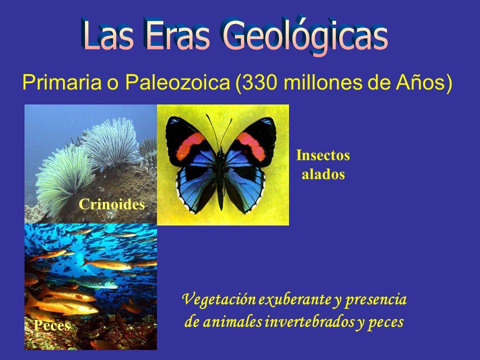 Primaria o Paleozoica (330 millones de Años) Peces Crinoides Insectos alados Vegetación exuberante y presencia de animales invertebrados y peces