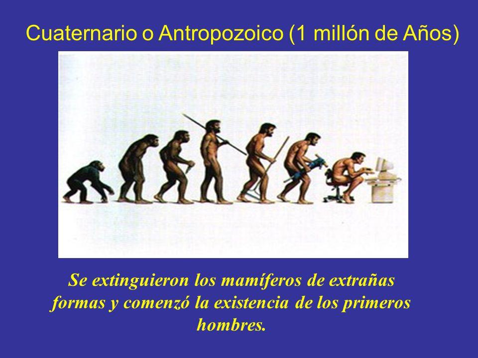 Cuaternario o Antropozoico (1 millón de Años) Se extinguieron los mamíferos de extrañas formas y comenzó la existencia de los primeros hombres.