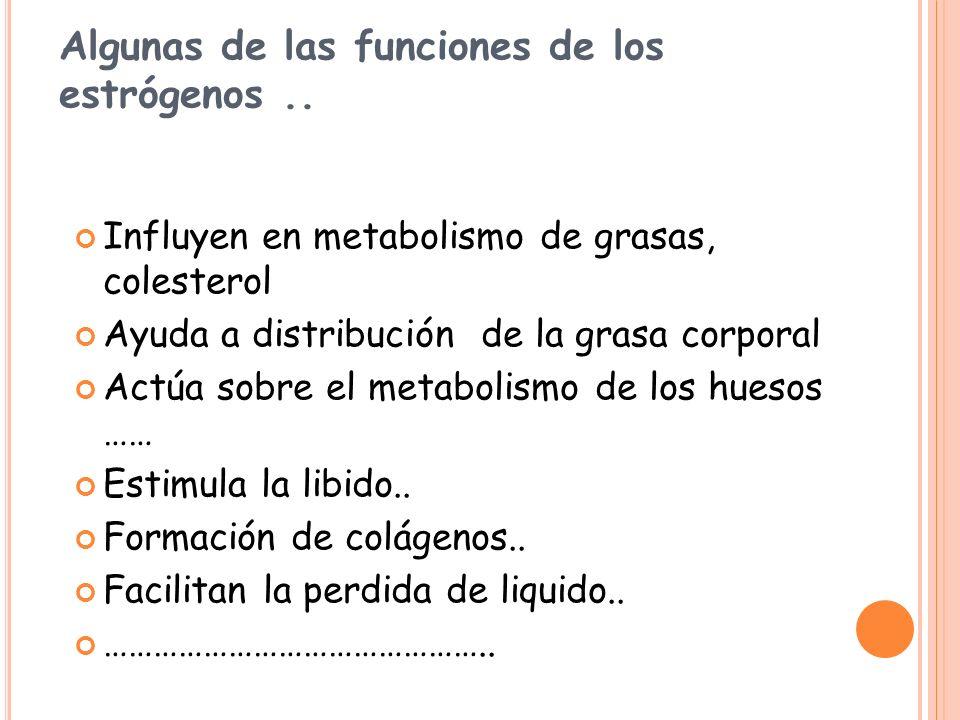 Algunas de las funciones de los estrógenos.. Influyen en metabolismo de grasas, colesterol Ayuda a distribución de la grasa corporal Actúa sobre el me