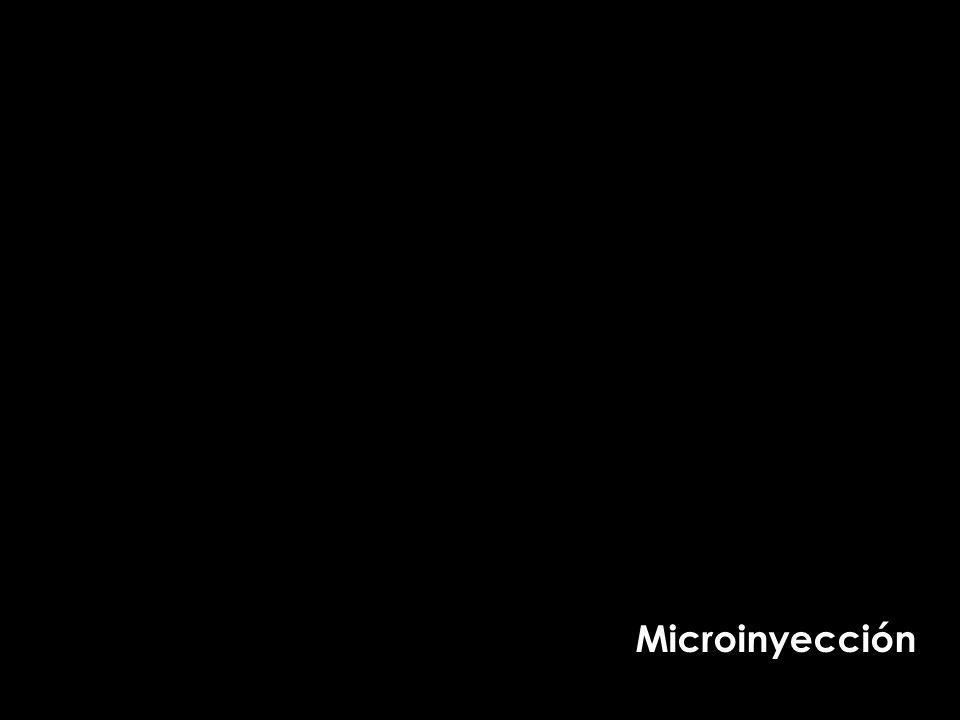 Microinyección