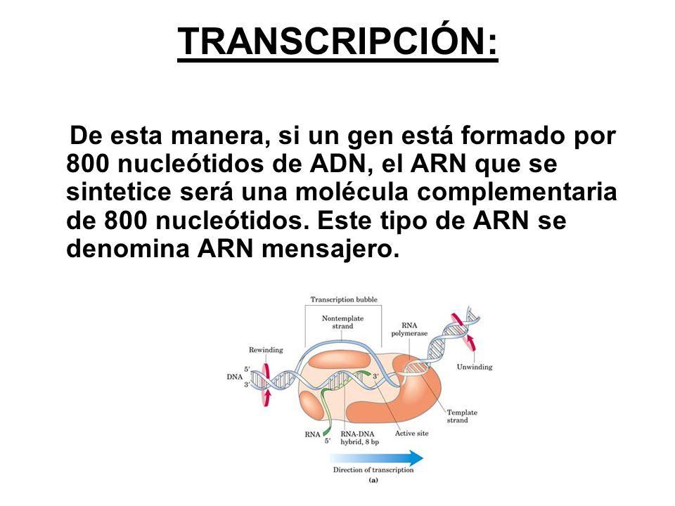 Etapas de la transcripción Descondensación de la cromatina.