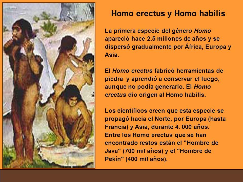 Homo erectus y Homo habilis La primera especie del género Homo apareció hace 2.5 millones de años y se dispersó gradualmente por África, Europa y Asia