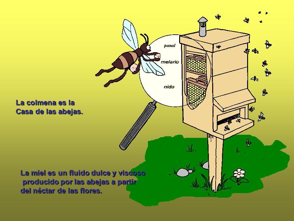 La miel es un fluido dulce y viscoso producido por las abejas a partir del néctar de las flores. La colmena es la Casa de las abejas.