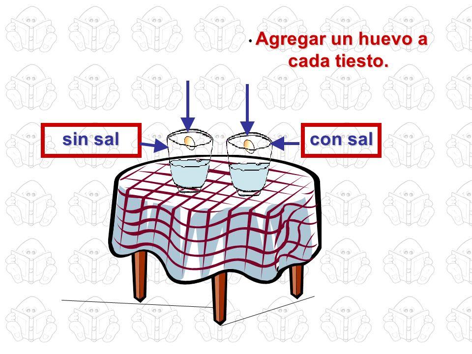 Agregar un huevo a cada tiesto. con sal sin sal