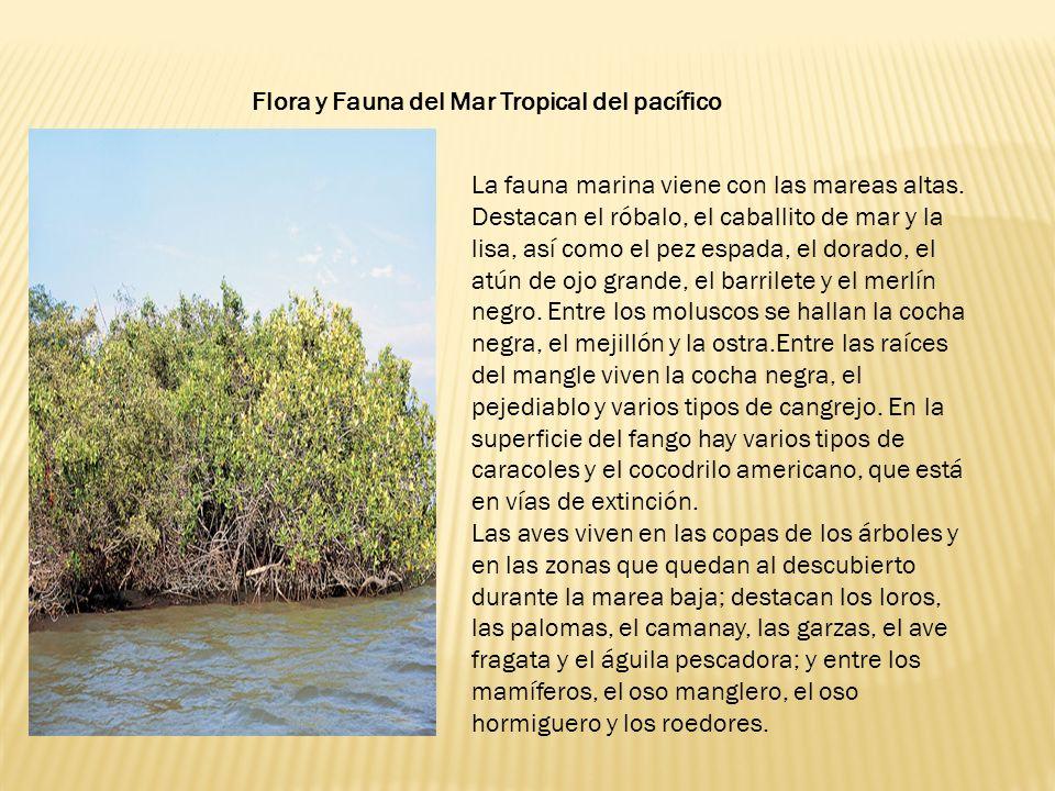 La fauna marina viene con las mareas altas.