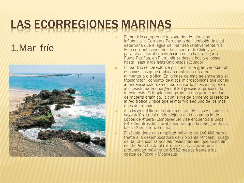 1.Mar frío El mar frío comprende la zona donde ejerce su influencia la Corriente Peruana o de Humboldt, la cual determina que el agua del mar sea rela