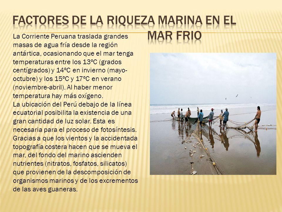 La Corriente Peruana traslada grandes masas de agua fría desde la región antártica, ocasionando que el mar tenga temperaturas entre los 13ºC (grados centígrados) y 14ºC en invierno (mayo- octubre) y los 15ºC y 17ºC en verano (noviembre-abril).