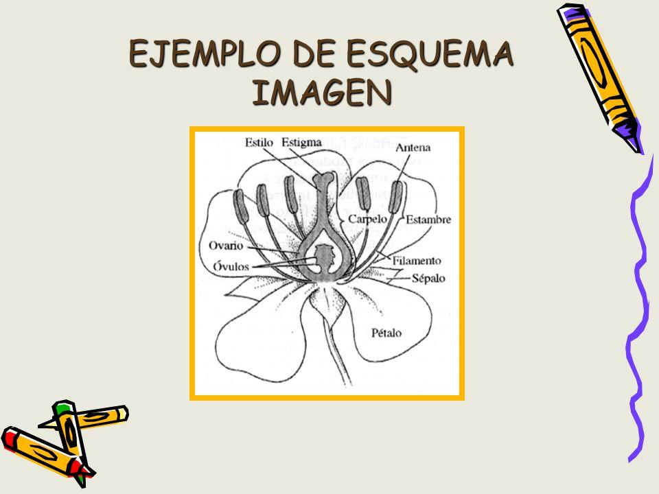 EJEMPLO DE ESQUEMA IMAGEN