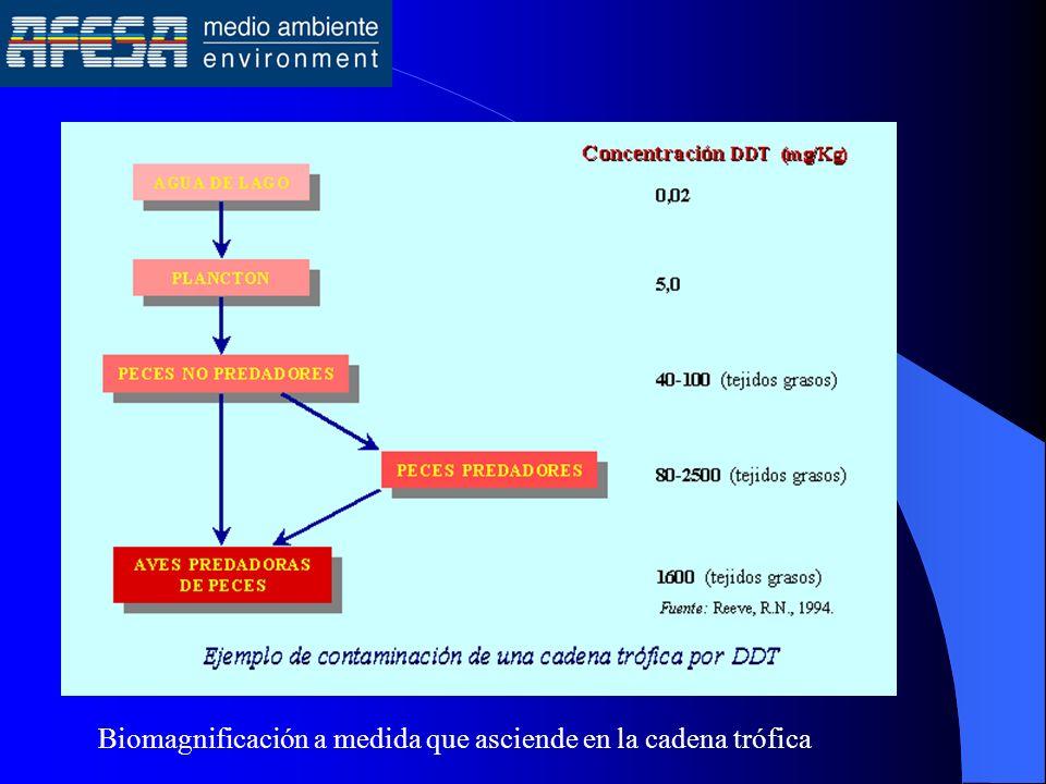 Biomagnificación a medida que asciende en la cadena trófica