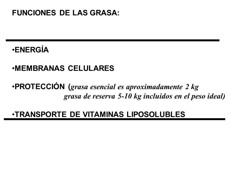 FUNCIONES DE LAS GRASA: ENERGÍA MEMBRANAS CELULARES PROTECCIÓN ( grasa esencial es aproximadamente 2 kg grasa de reserva 5-10 kg incluidos en el peso