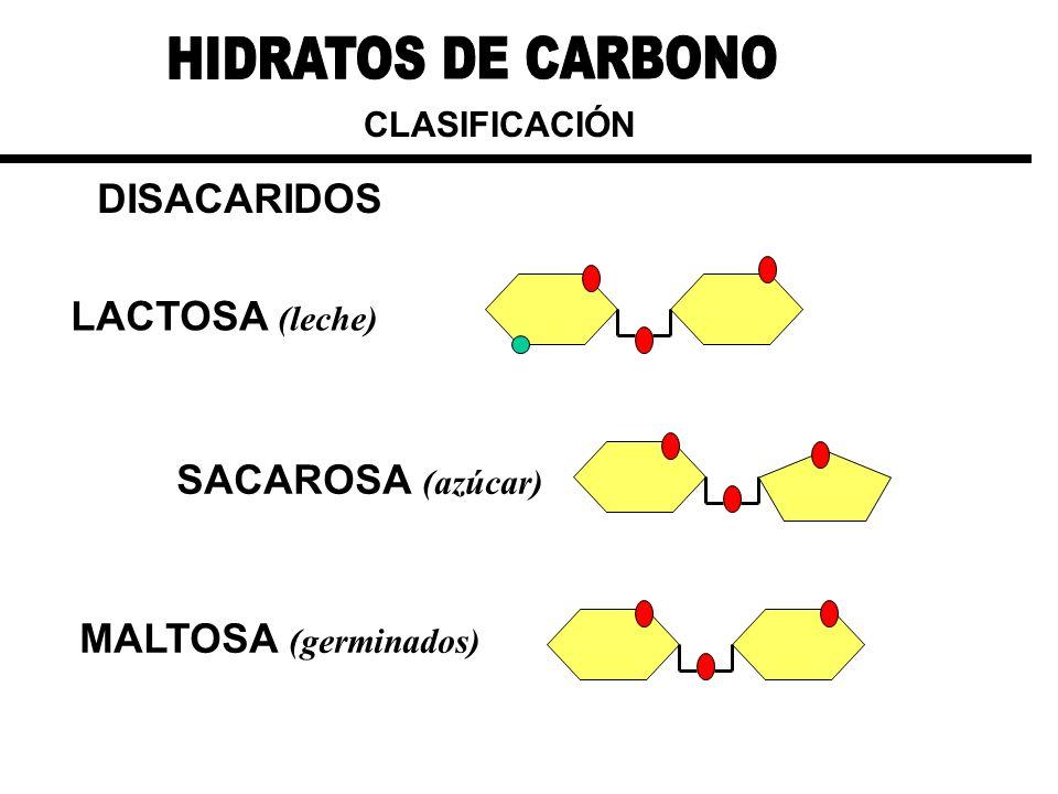 CLASIFICACIÓN DISACARIDOS LACTOSA (leche) SACAROSA (azúcar) MALTOSA (germinados)