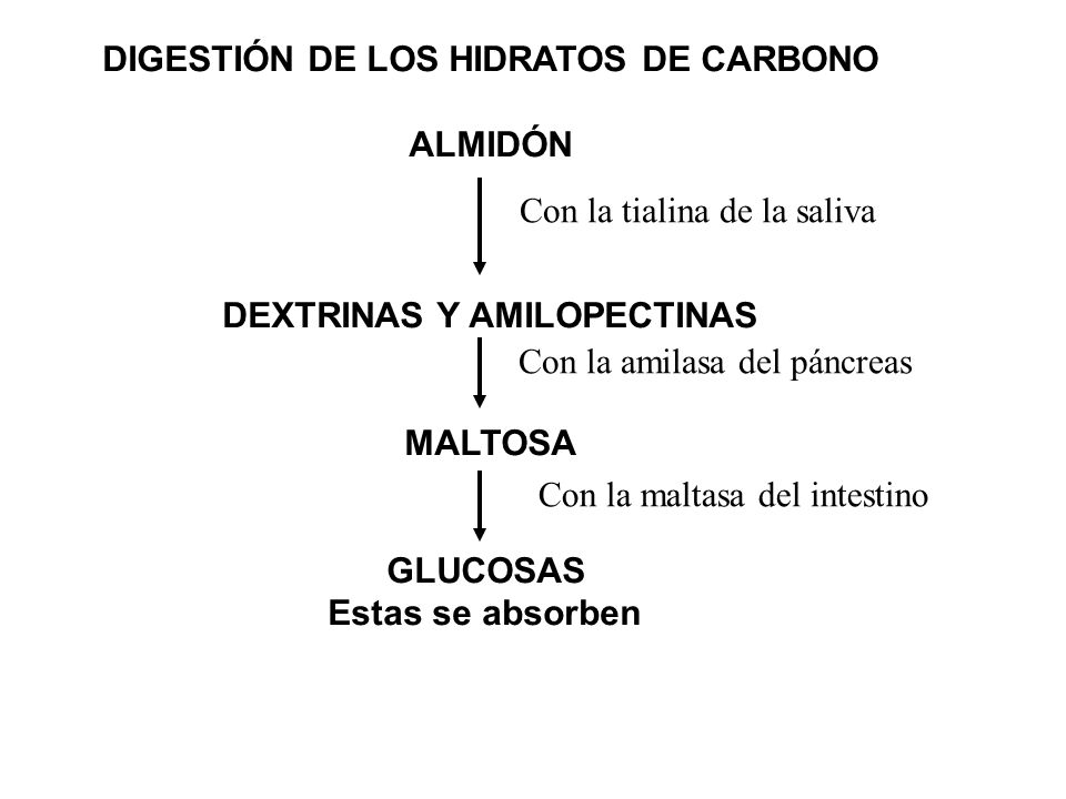 DIGESTIÓN DE LOS HIDRATOS DE CARBONO ALMIDÓN DEXTRINAS Y AMILOPECTINAS MALTOSA GLUCOSAS Estas se absorben Con la tialina de la saliva Con la amilasa d
