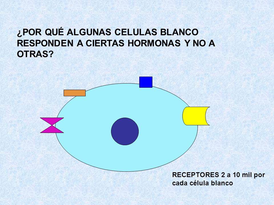 ¿POR QUÉ ALGUNAS CELULAS BLANCO RESPONDEN A CIERTAS HORMONAS Y NO A OTRAS? RECEPTORES 2 a 10 mil por cada célula blanco