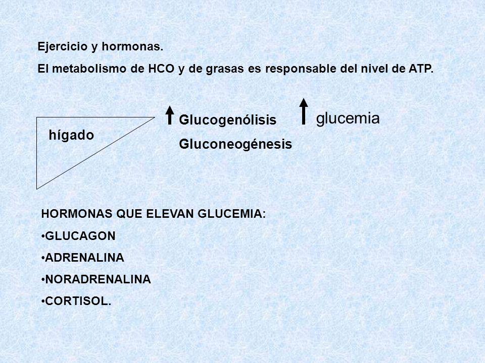 Ejercicio y hormonas. El metabolismo de HCO y de grasas es responsable del nivel de ATP. hígado Glucogenólisis Gluconeogénesis glucemia HORMONAS QUE E