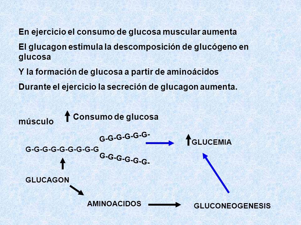 En ejercicio el consumo de glucosa muscular aumenta El glucagon estimula la descomposición de glucógeno en glucosa Y la formación de glucosa a partir