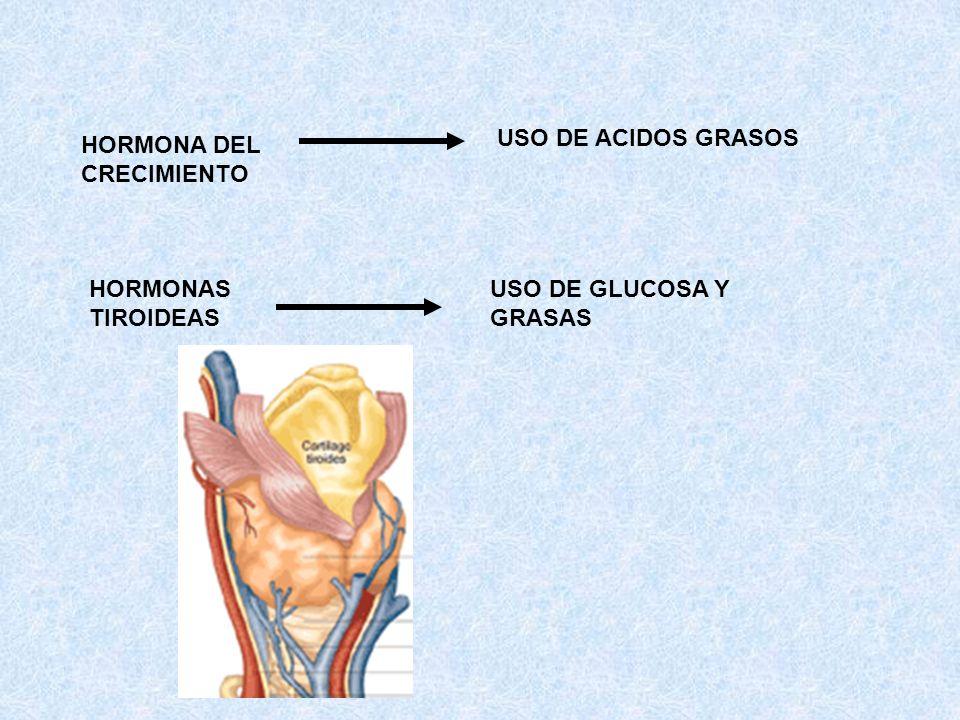 HORMONA DEL CRECIMIENTO USO DE ACIDOS GRASOS HORMONAS TIROIDEAS USO DE GLUCOSA Y GRASAS