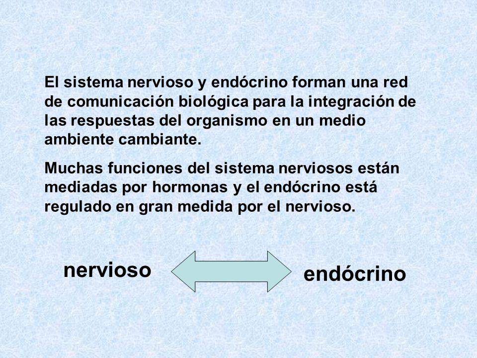 El sistema nervioso y endócrino forman una red de comunicación biológica para la integración de las respuestas del organismo en un medio ambiente camb