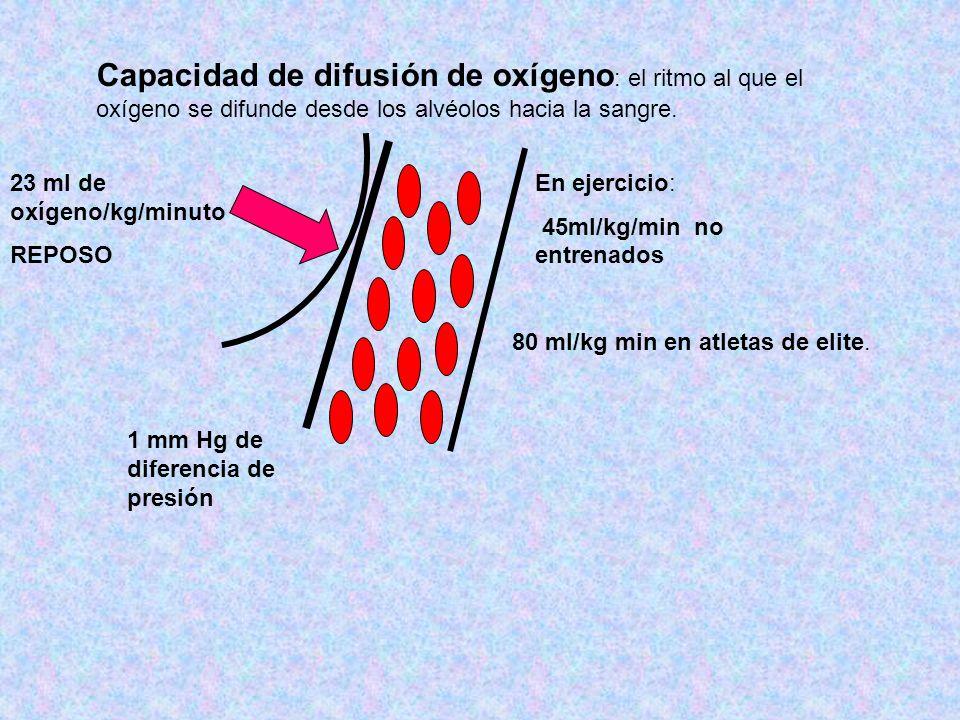 Capacidad de difusión de oxígeno : el ritmo al que el oxígeno se difunde desde los alvéolos hacia la sangre. 23 ml de oxígeno/kg/minuto REPOSO 1 mm Hg