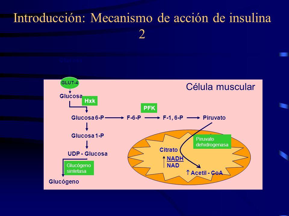 Introducción: Mecanismo de acción de insulina Proteínas Enzimas RNA DNA Insulina Receptor IRS-1 p85 PI- 3K pY FT Vía mitogénica Vía metabólica
