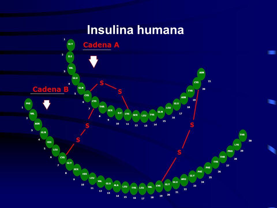 Clasificación ADA-97, OMS-98 Diabetes tipo 1 Mediada por inmunidad Idiopática Diabetes tipo 2 DM tipo 2.- insulinorresistencia DM tipo 2.- déficit sec