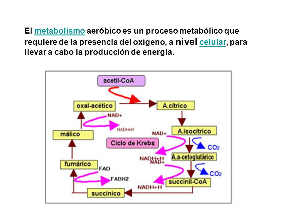 El metabolismo aeróbico es un proceso metabólico que requiere de la presencia del oxígeno, a nivel celular, para llevar a cabo la producción de energí