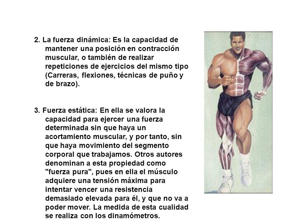 2. La fuerza dinámica: Es la capacidad de mantener una posición en contracción muscular, o también de realizar repeticiones de ejercicios del mismo ti