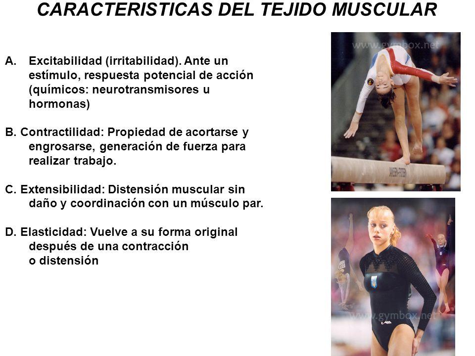 CARACTERISTICAS DEL TEJIDO MUSCULAR A.Excitabilidad (irritabilidad). Ante un estímulo, respuesta potencial de acción (químicos: neurotransmisores u ho