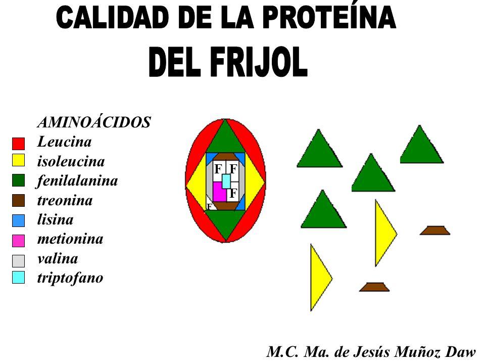 F F F F AMINOÁCIDOS Leucina isoleucina fenilalanina treonina lisina metionina valina triptofano M.C. Ma. de Jesús Muñoz Daw