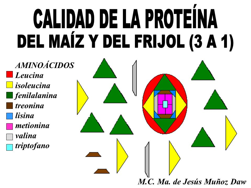AMINOÁCIDOS Leucina isoleucina fenilalanina treonina lisina metionina valina triptofano M.C. Ma. de Jesús Muñoz Daw