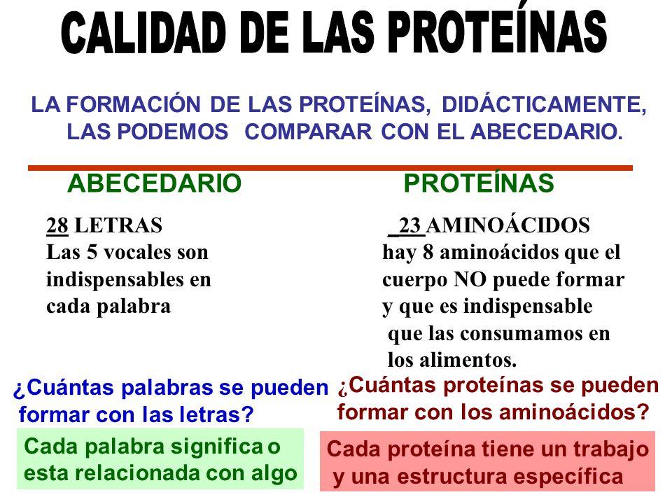 LA FORMACIÓN DE LAS PROTEÍNAS, DIDÁCTICAMENTE, LAS PODEMOS COMPARAR CON EL ABECEDARIO. 28 LETRAS _23 AMINOÁCIDOS Las 5 vocales son hay 8 aminoácidos q