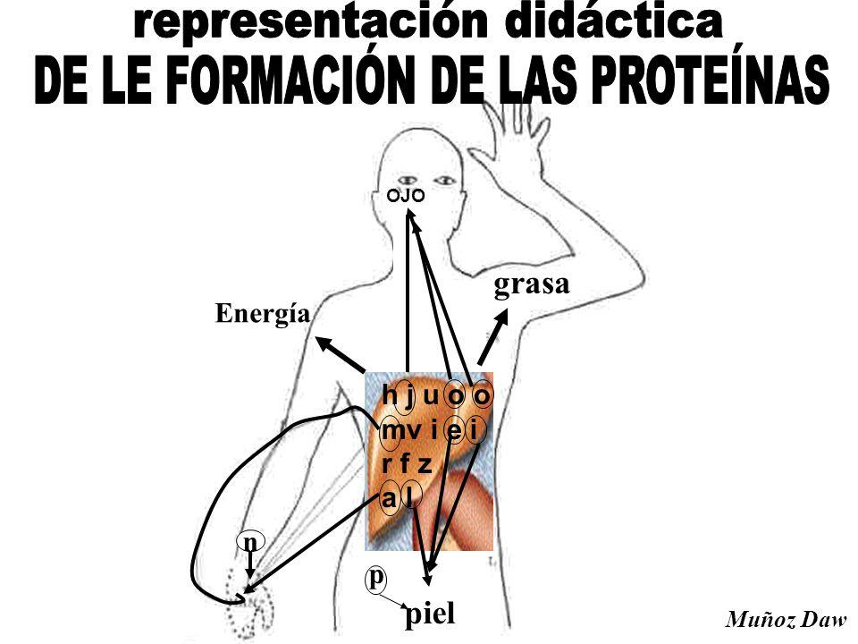h j u o o mv i e i r f z a l OJO n piel p grasa Energía Muñoz Daw