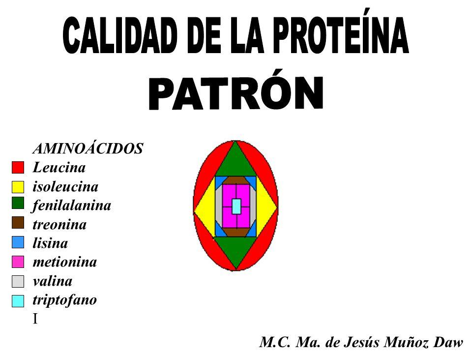 AMINOÁCIDOS Leucina isoleucina fenilalanina treonina lisina metionina valina triptofano I M.C. Ma. de Jesús Muñoz Daw