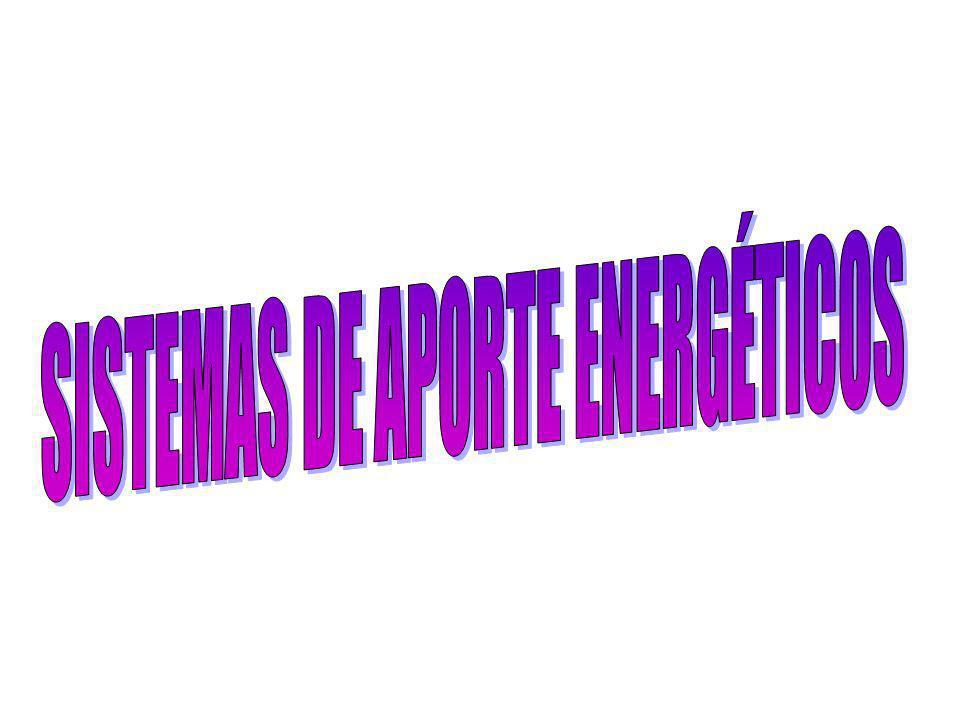 MEDIANTE EL EJERCICIO SE TRANSFORMA: